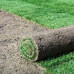 Roll of fresh sod for new lawn